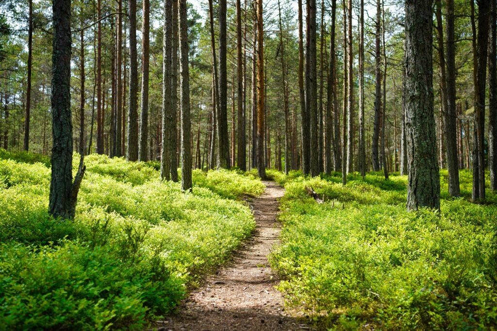 unbefestigter Weg durch den Wald, um die vielen Möglichkeiten aufzuzeigen